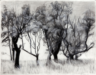 Collection of trees (2015)